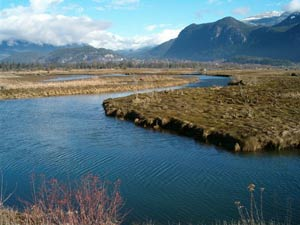 The Estuary in Squamish BC